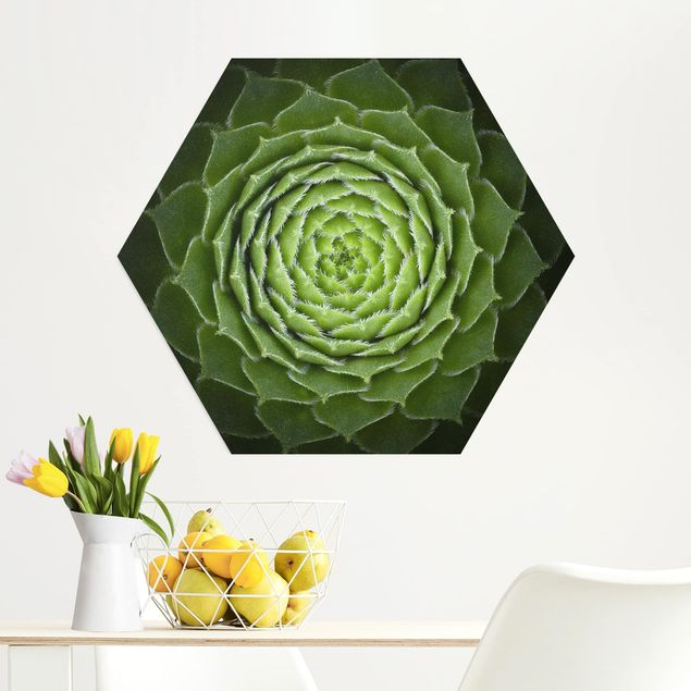 Hexagon Bild Alu-Dibond - Mandala Sukkulente