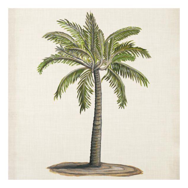 Glas Spritzschutz - Britische Palmen I - Quadrat - 1:1