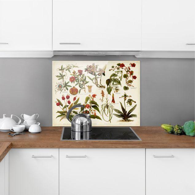 Glas Spritzschutz - Vintage Lehrtafel Tropische Botanik II - Querformat - 4:3