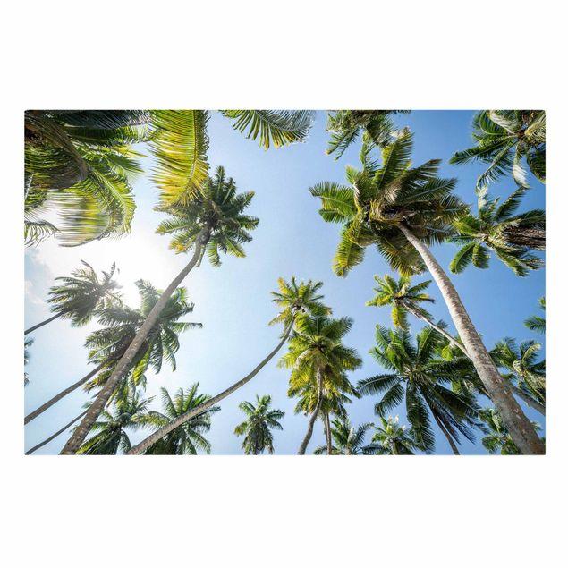 Leinwandbild - Palmen Himmel - Querformat 3:2