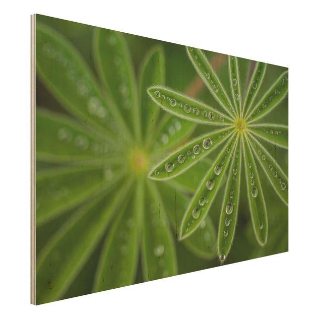 Holzbild - Morgentau auf Lupinenblättern - Querformat 2:3