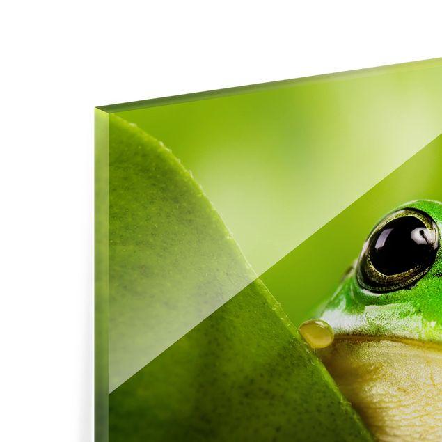 Glas Spritzschutz - Wetterfrosch - Querformat - 4:3