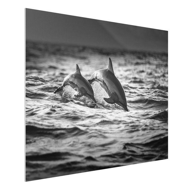 Forex Fine Art Print - Zwei springende Delfine - Querformat 3:4