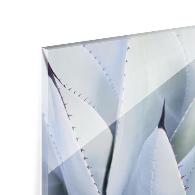 Glas Spritzschutz - Agavenblätter - Querformat - 4:3
