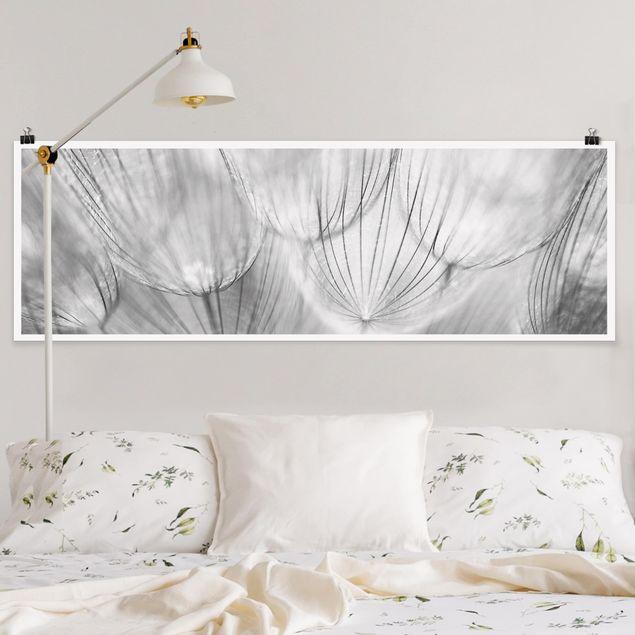 Poster - Pusteblumen Makroaufnahme in schwarz weiß - Panorama Querformat