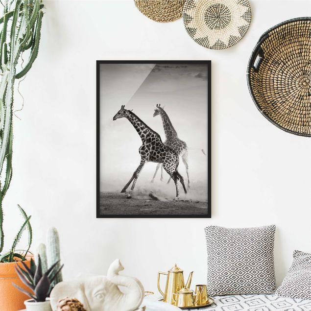 Bild mit Rahmen - Giraffenjagd - Hochformat 3:4