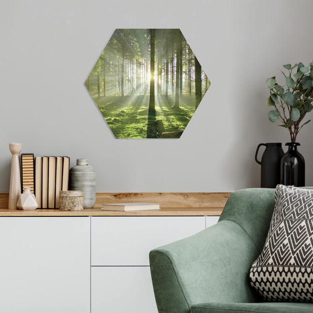 Hexagon Bild Forex - Spring Fairytale