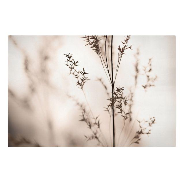 Leinwandbild - Elegantes Gras im Schatten - Querformat 3:2