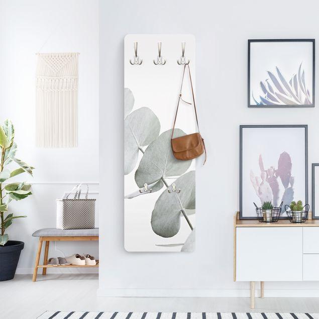 Garderobe - Eukalyptuszweig im Weißen Licht