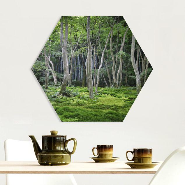 Hexagon Bild Forex - Japanischer Wald