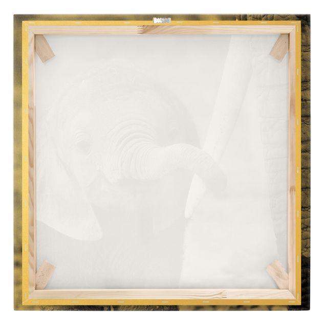 Leinwandbild Gold - Elefantenbaby - Quadrat 1:1