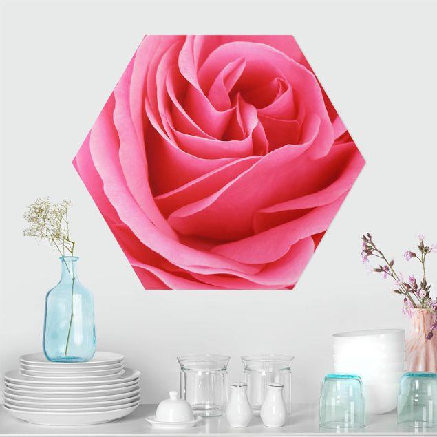 Hexagon Bild Alu-Dibond - Lustful Pink Rose