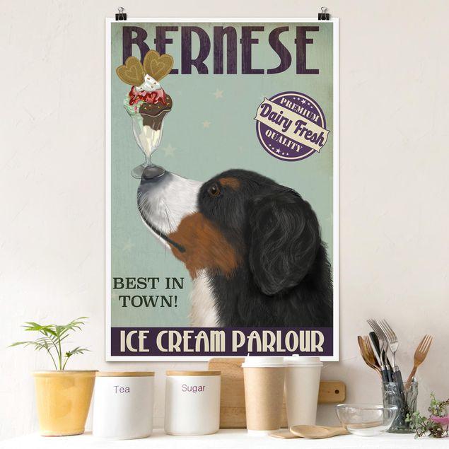 Poster - Berner Sennenhund mit Eis - Hochformat 3:2
