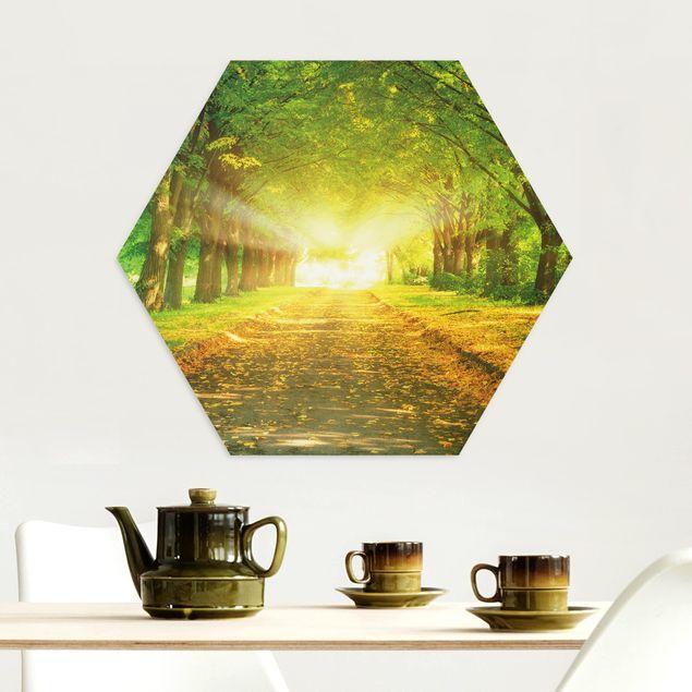 Hexagon Bild Alu-Dibond - Autumn Avenue