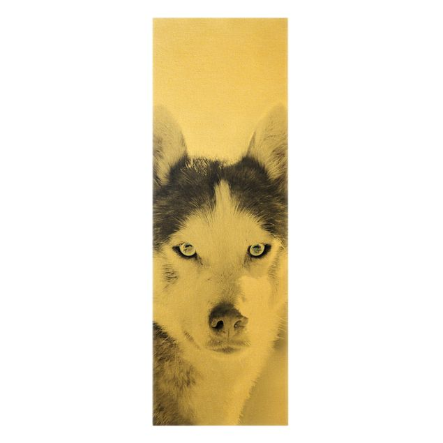 Leinwandbild Gold - Husky Portrait - Hochformat 1:3