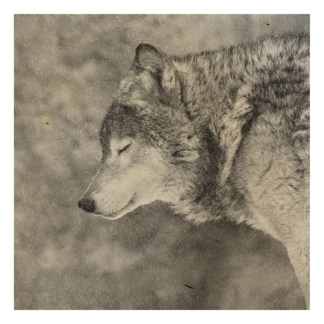 Holzbild - Winter Wolf - Quadrat 1:1