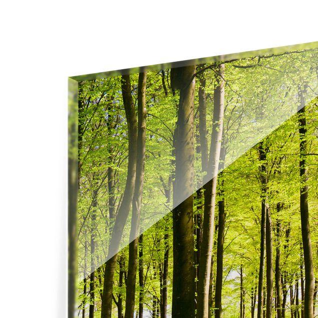 Glas Spritzschutz - Waldwiese - Quadrat - 1:1