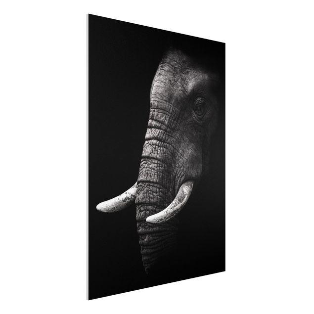 Forex Fine Art Print - Dunkles Elefanten Portrait - Hochformat 4:3