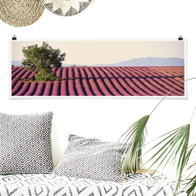 Poster - Lavender - Panorama Querformat