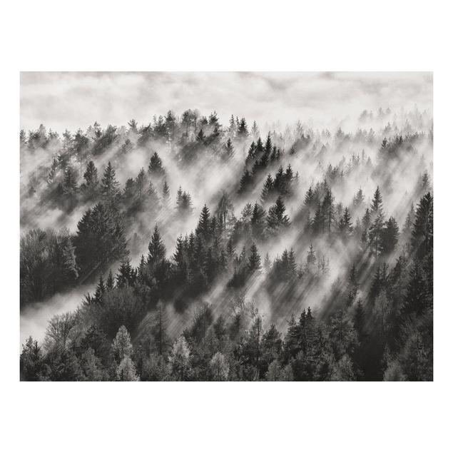 Forex Fine Art Print - Lichtstrahlen im Nadelwald - Querformat 3:4