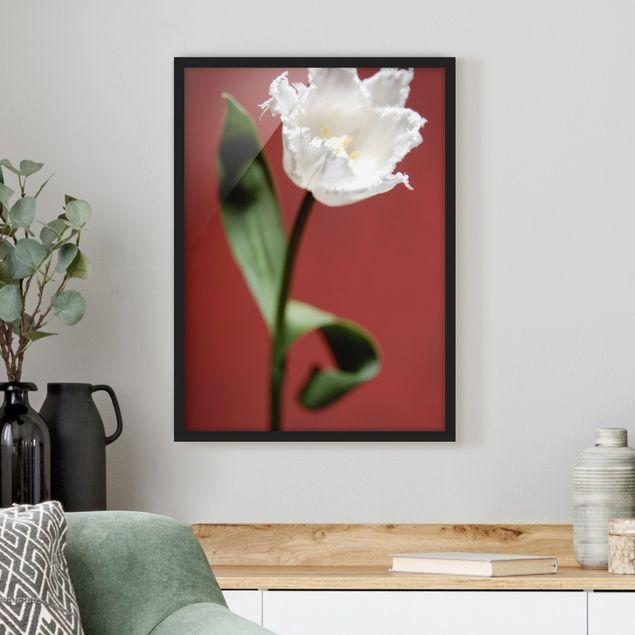 Bild mit Rahmen - Breathtaking white Tulip - Hochformat 3:4