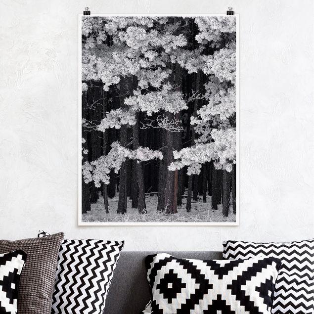 Poster - Wald mit Raureif in Österreich - Hochformat 3:4