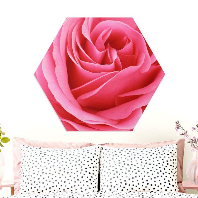 Hexagon Bild Forex - Lustful Pink Rose