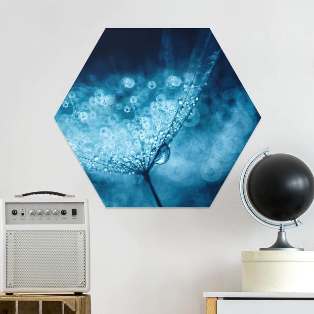 Hexagon Bild Forex - Blaue Pusteblume im Regen