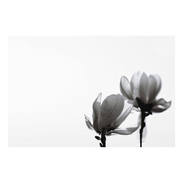 Spritzschutz Glas - Frühlingsbote Magnolie Schwarz Weiß - Querformat 3:2