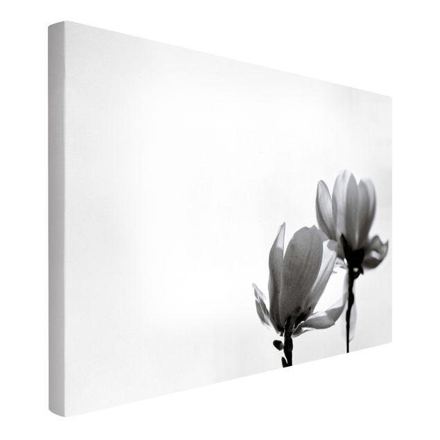 Leinwandbild - Frühlingsbote Magnolie Schwarz Weiß - Querformat 3:2