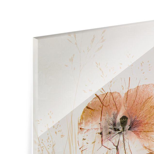 Spritzschutz Glas - Getrocknete Mohnblüten mit zarten Gräsern - Querformat 2:1