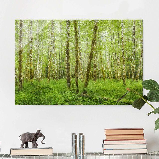 Glasbild - Hoh Rainforest Olympic National Park - Querformat 2:3