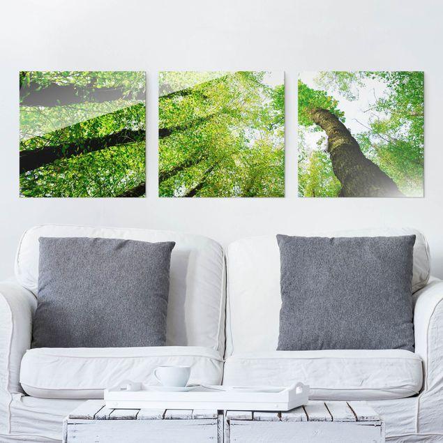 Glasbild mehrteilig - Bäume des Lebens 3-teilig - Waldbild Glas