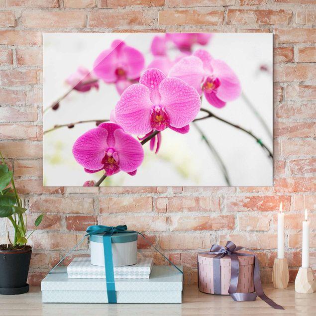 Glasbild Orchidee - Nahaufnahme Orchidee - Blumenbild Glas Quer 3:2