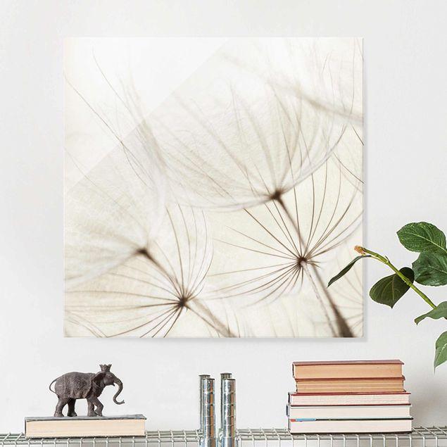 Glasbild - Sanfte Gräser - Quadrat 1:1 - Blumenbild Glas