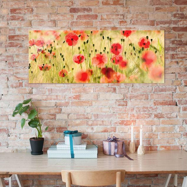 Glasbild - Summer Poppies - Panorama Quer