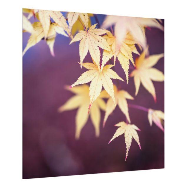 Spritzschutz Glas - Herbstlicher Ahorn - Quadrat 1:1