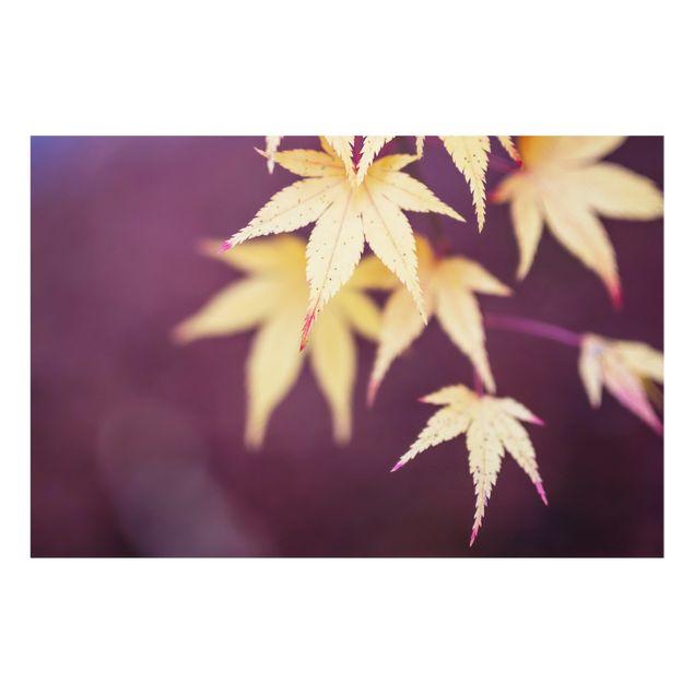Spritzschutz Glas - Herbstlicher Ahorn - Querformat 3:2