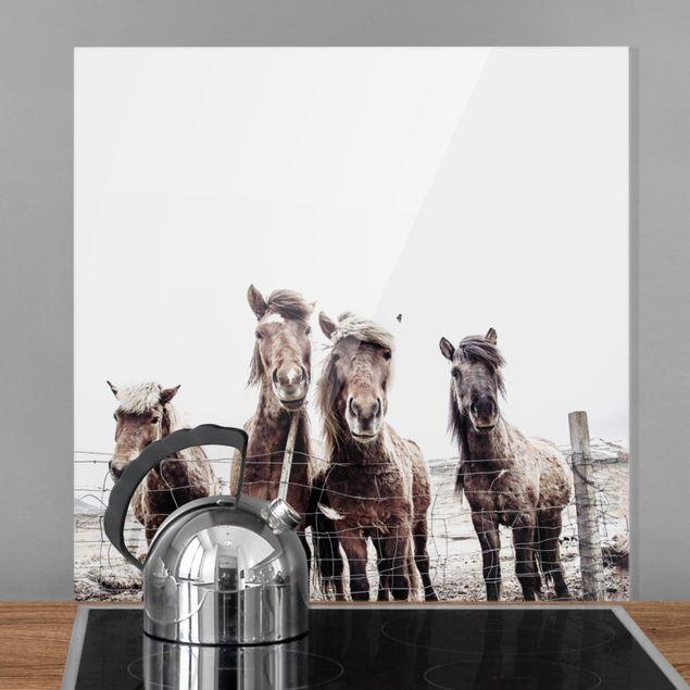 Spritzschutz Glas - Island Pferde - Quadrat 1:1