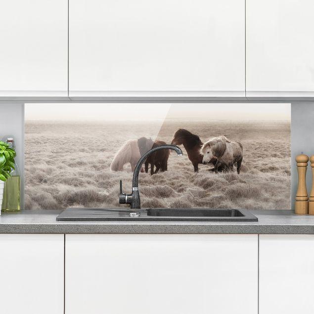 Spritzschutz Glas - Island Wildpferde - Panorama 5:2