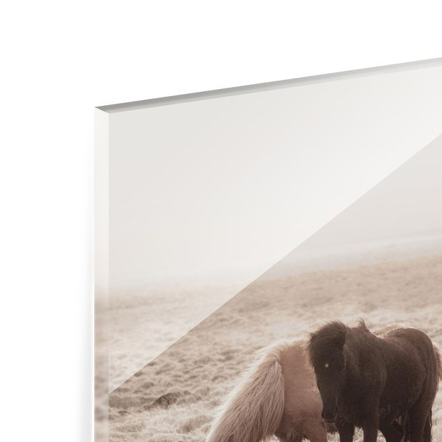 Spritzschutz Glas - Island Wildpferde - Querformat 4:3