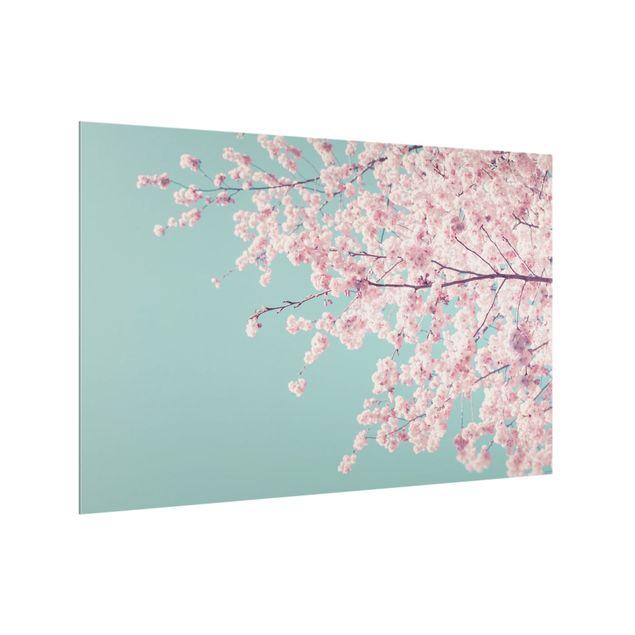Spritzschutz Glas - Japanische Kirschblüte - Querformat 3:2