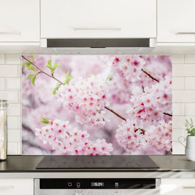 Spritzschutz Glas - Japanische Kirschblüten - Querformat 3:2