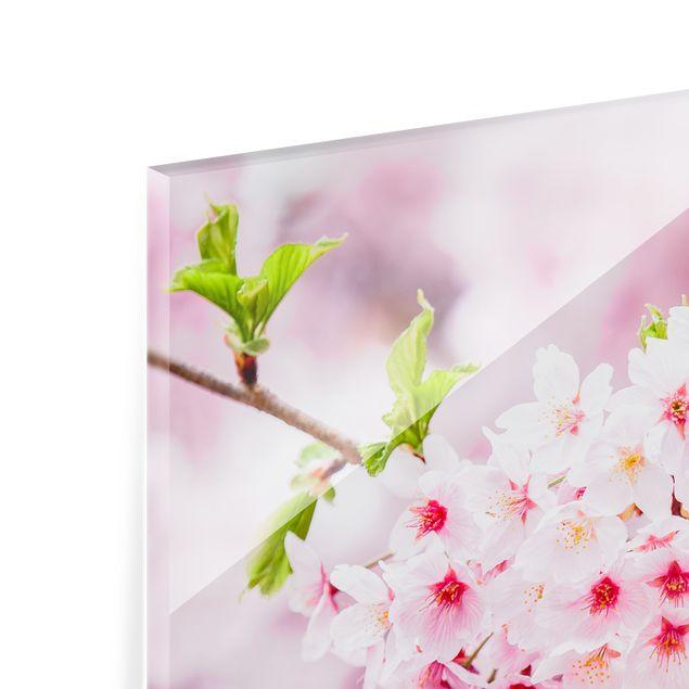 Spritzschutz Glas - Japanische Kirschblüten - Quadrat 1:1
