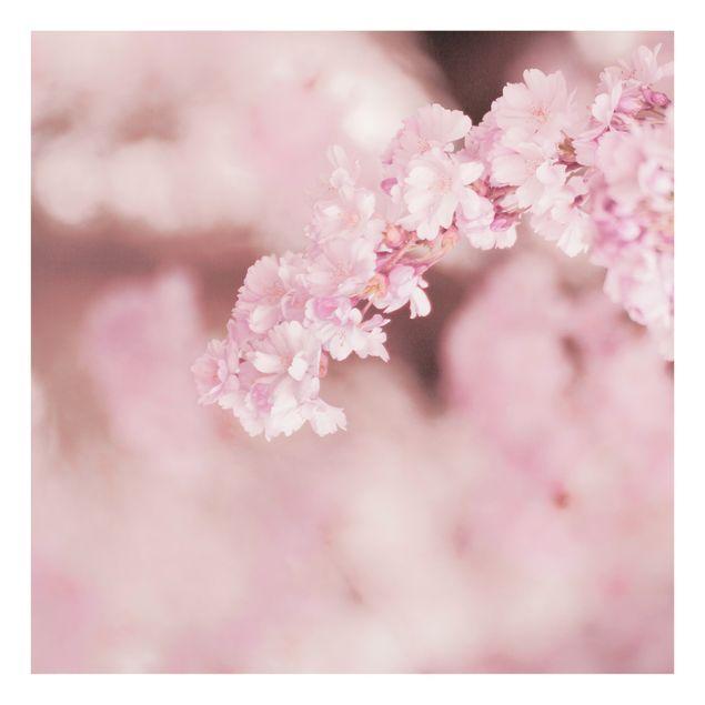 Spritzschutz Glas - Kirschblüte im Violetten Licht - Quadrat 1:1