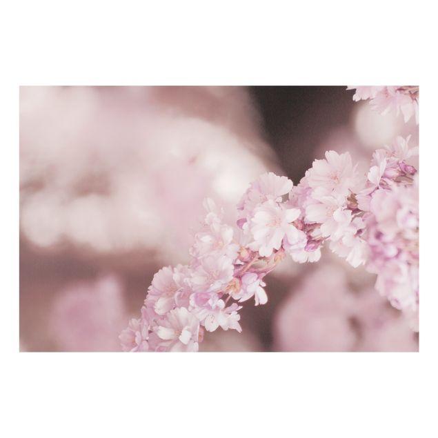 Spritzschutz Glas - Kirschblüte im Violetten Licht - Querformat 3:2