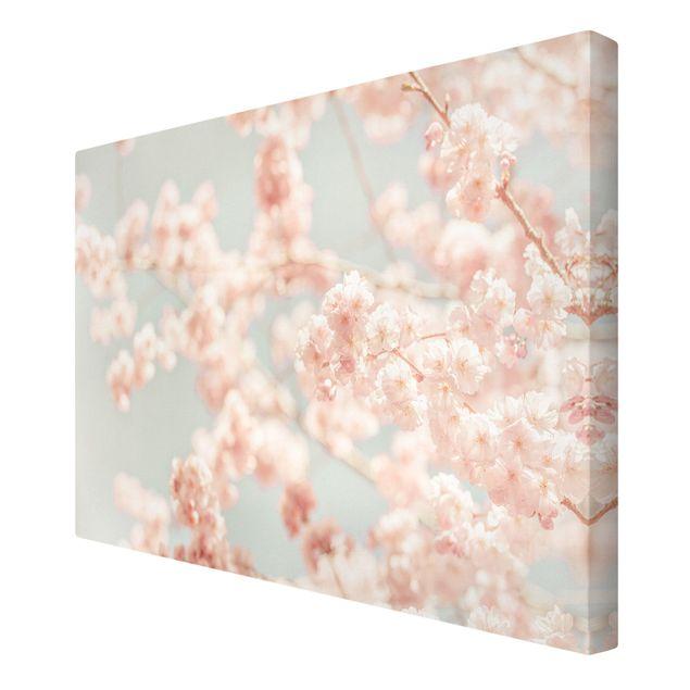 Leinwandbild - Kirschblüten Glow - Querformat 3:2