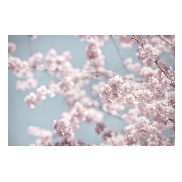 Leinwandbild - Kirschblütenparty - Querformat 3:2