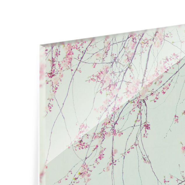 Spritzschutz Glas - Kirschblütensehnsucht - Querformat 2:1