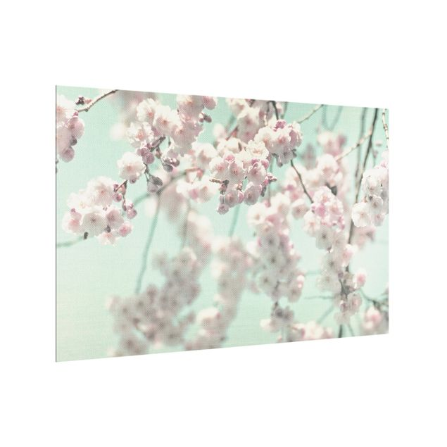 Spritzschutz Glas - Kirschblütentanz auf Leinenstruktur - Querformat 3:2